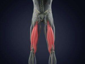 reielihased hamstringi lihased, füsioteraapia ,reakt